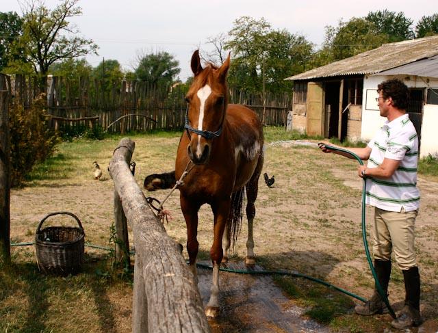 Stohl András a kétórás edzések után mindig lecsutakolja a lovat