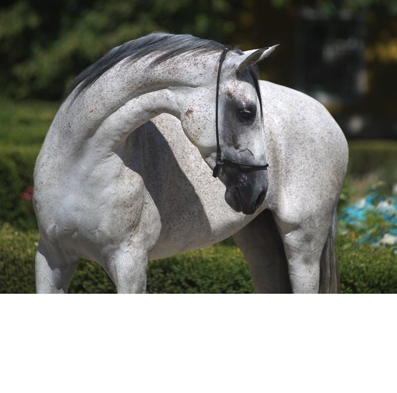Ismerd meg a PreVital Nemzetközi Futamában induló lovakat!