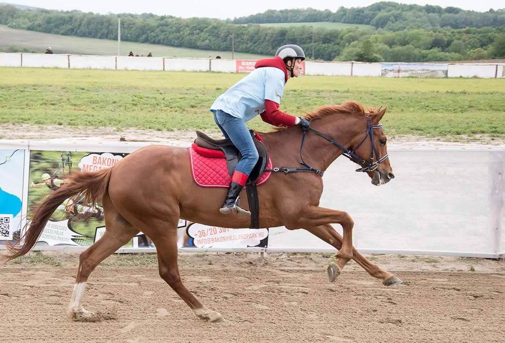 Molnár Gyöngyi új lovával edz
